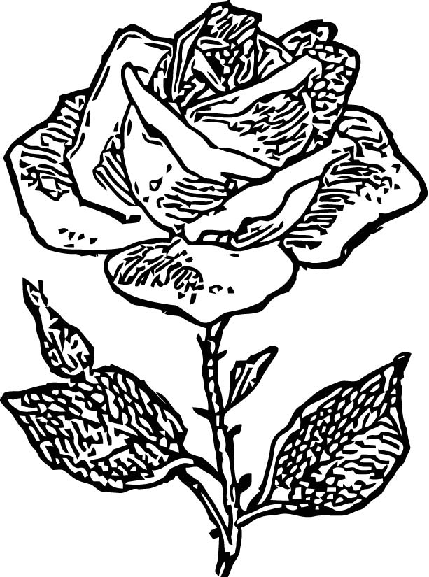 Rose Drawing Coloring Page