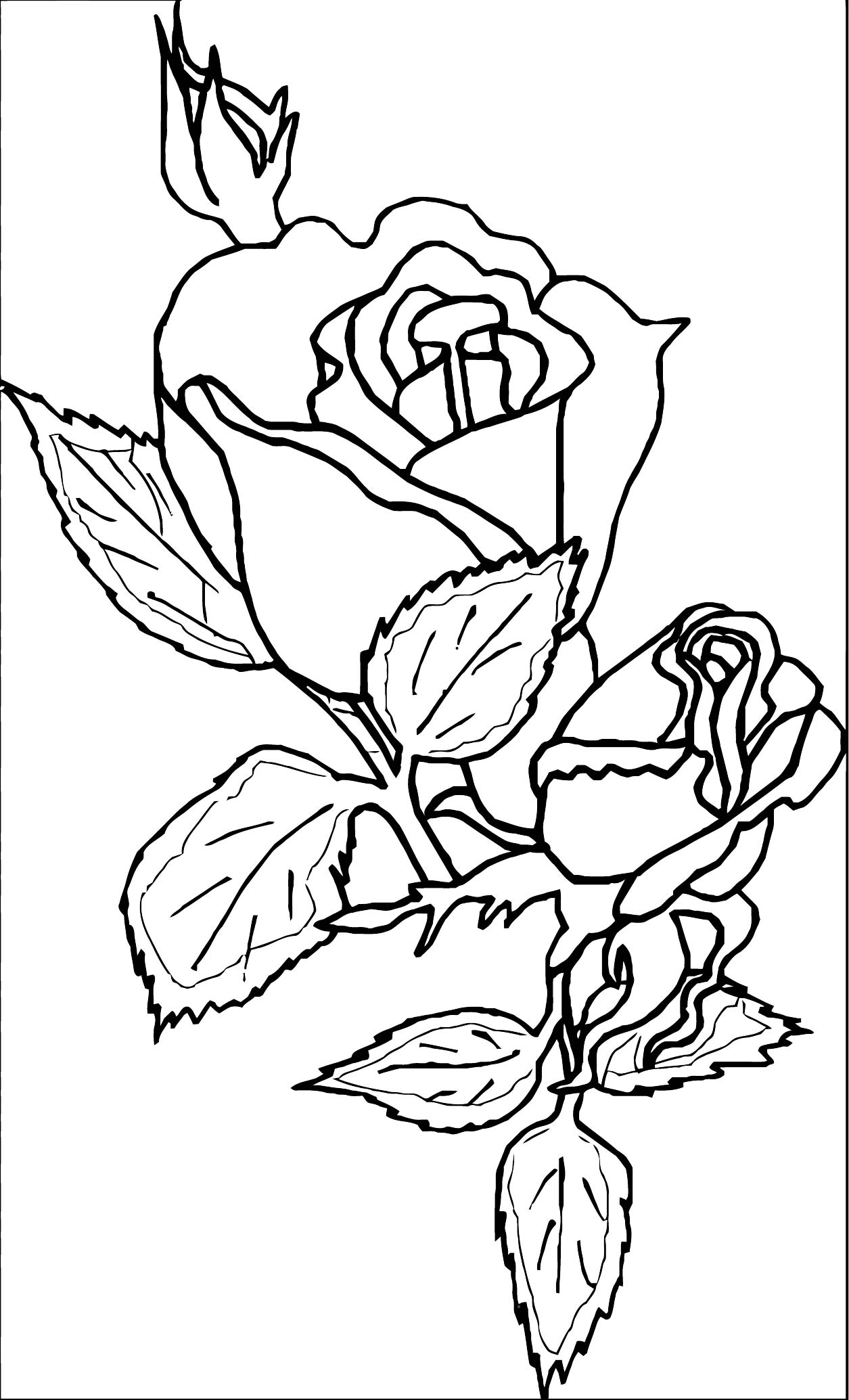 Rose Flower Coloring Page 016