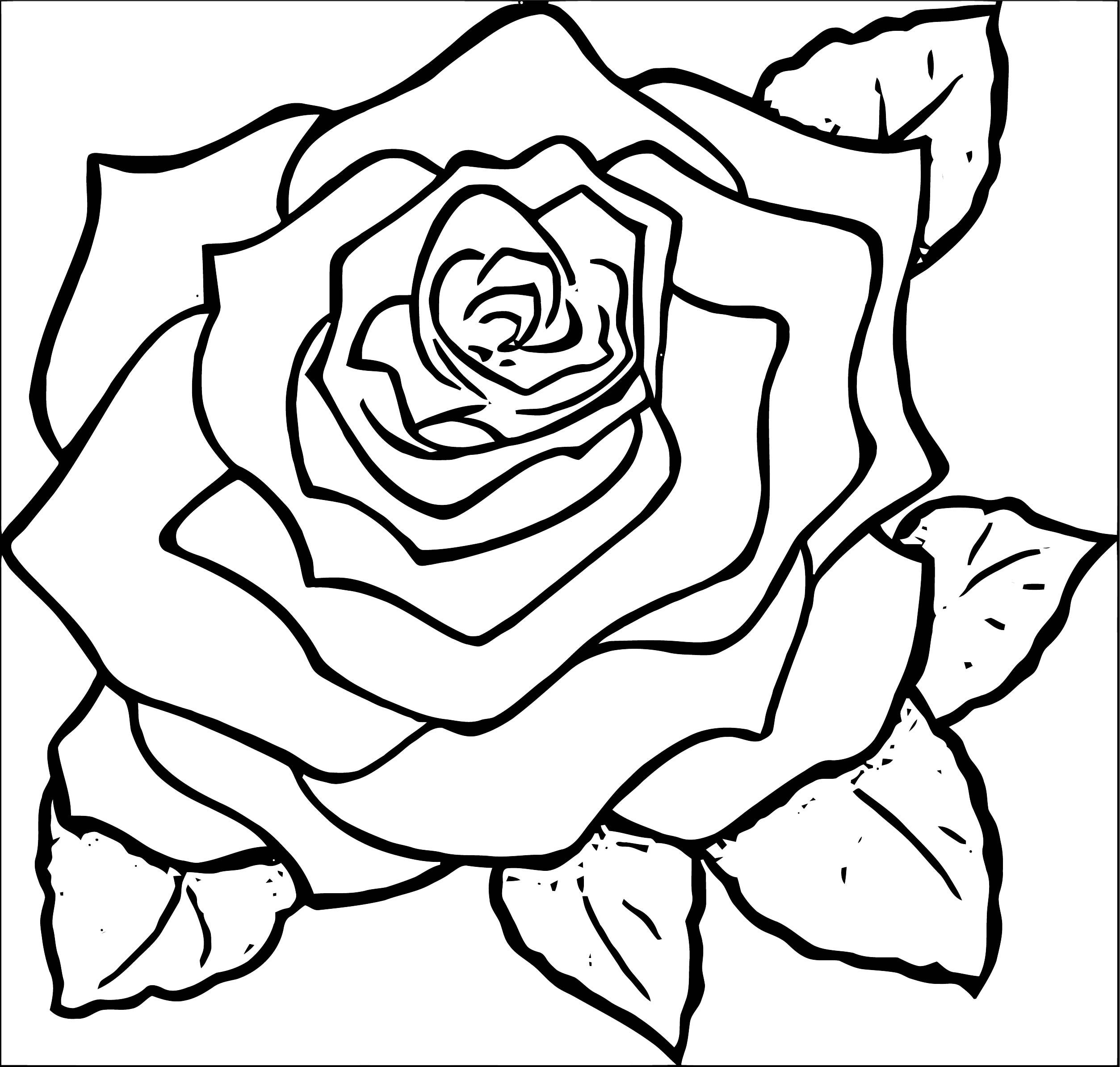 Rose Flower Coloring Page 072