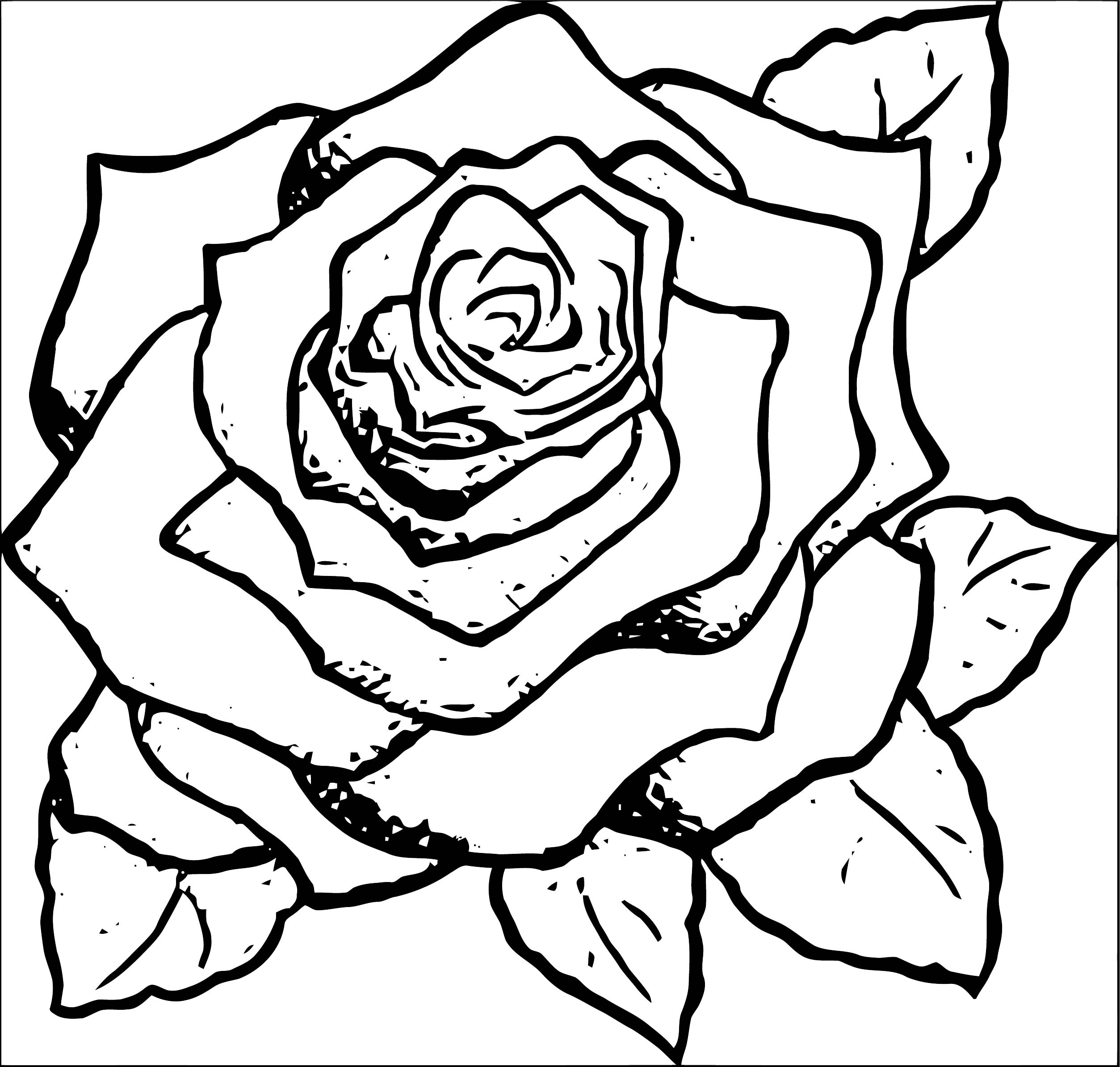 Rose Flower Coloring Page 076