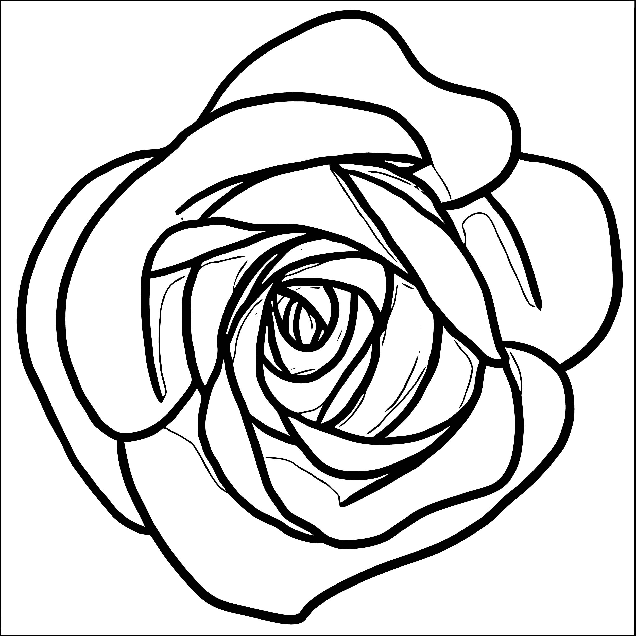 Rose Flower Coloring Page 082