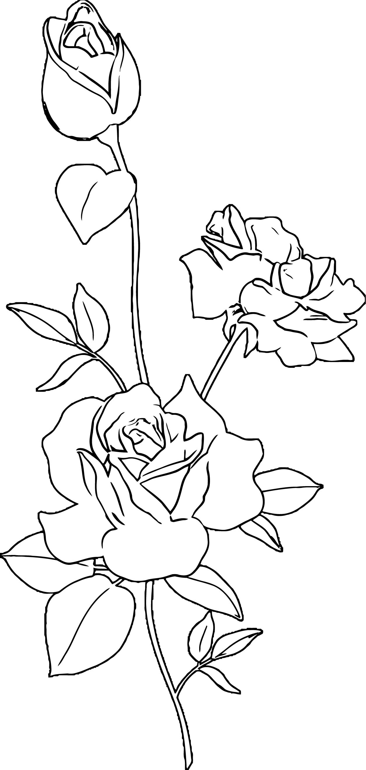 Rose Flower Coloring Page 101