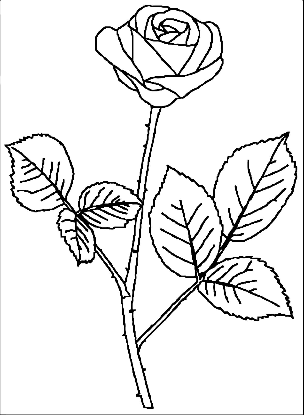 Rose Flower Coloring Page 125