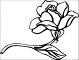 Rose Flower Coloring Page 140