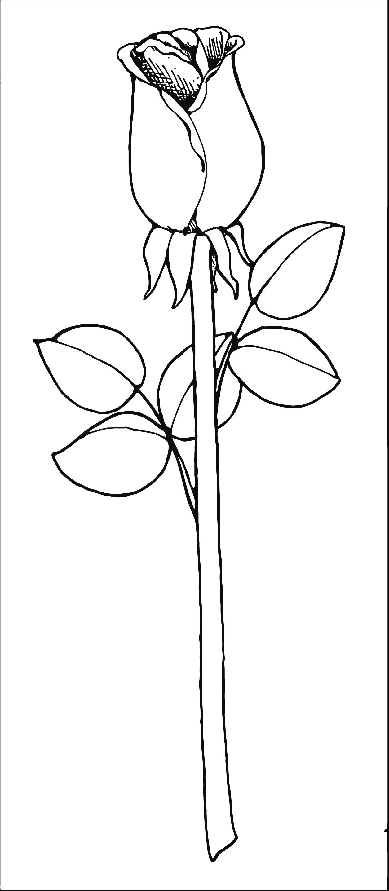 Rose Flower Coloring Page 157