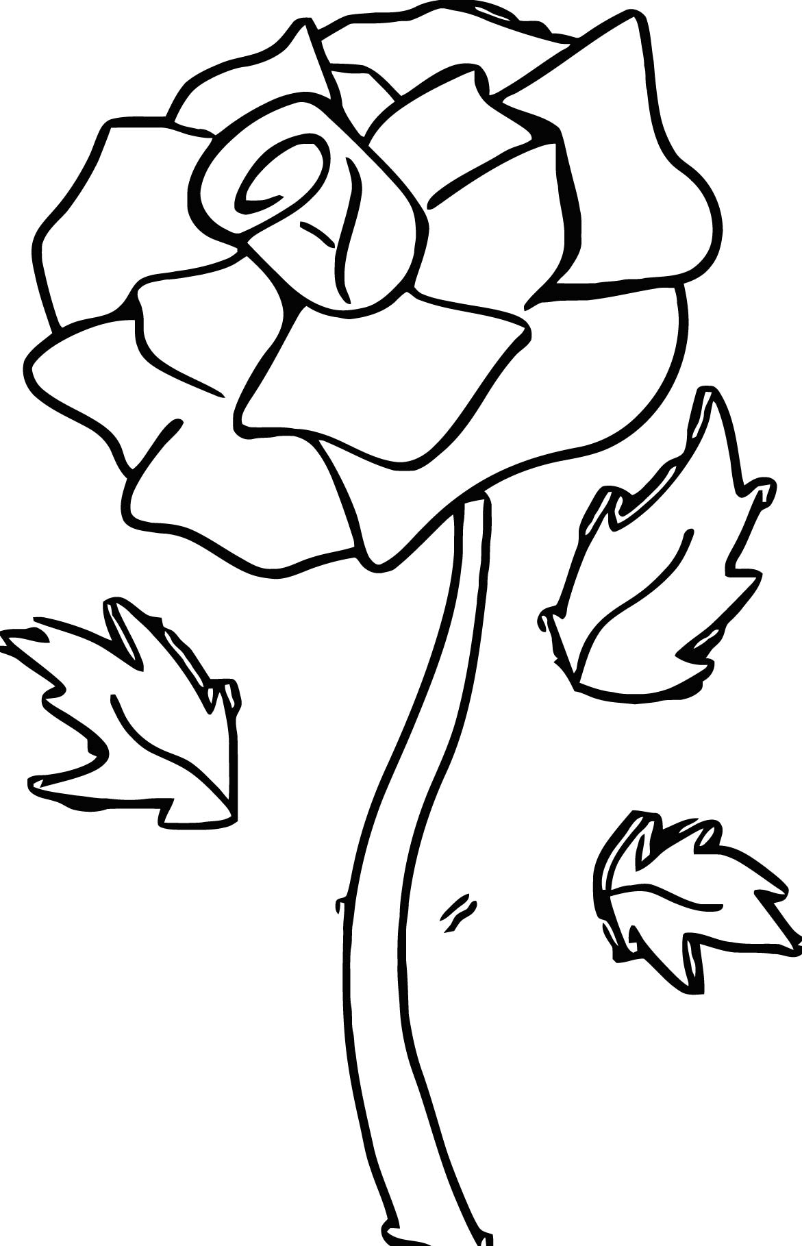 Rose Rosepink Coloring Page
