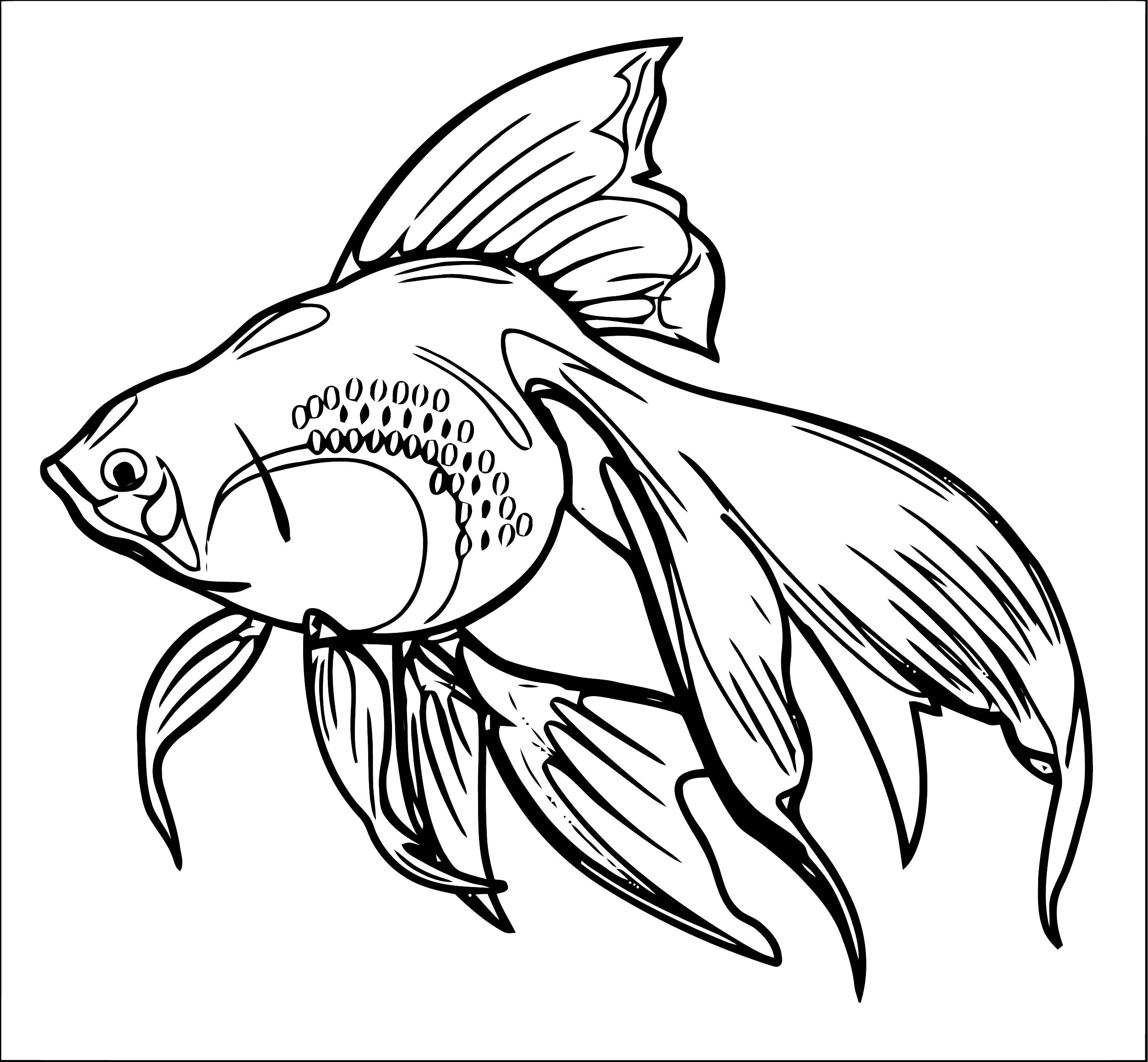 Fish Coloring Page WeColoringPage 120