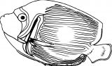 Fish Coloring Page WeColoringPage 123