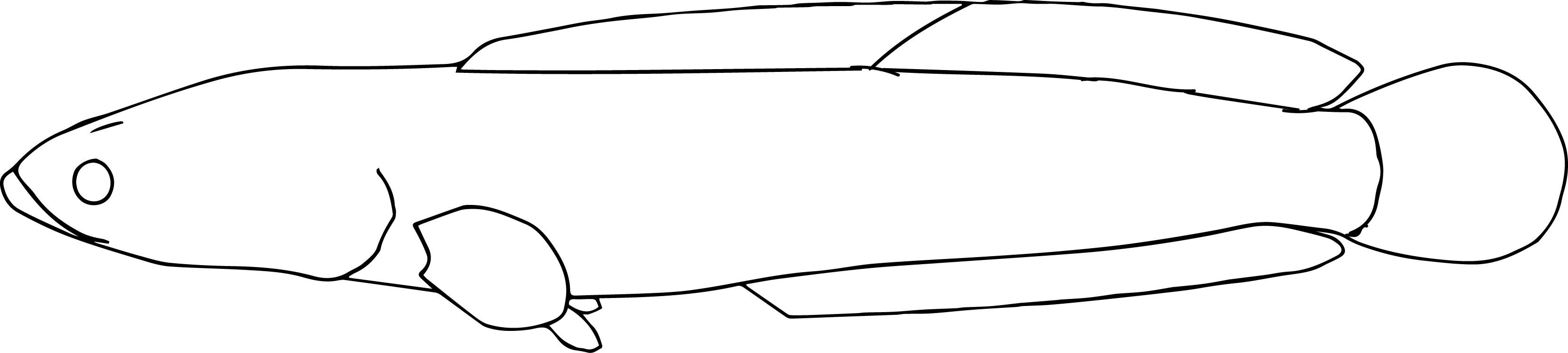 Kamuruti Fish Coloring Page
