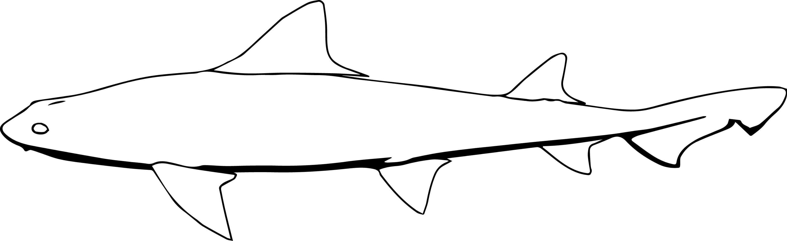 Leopardshark Fish Coloring Page