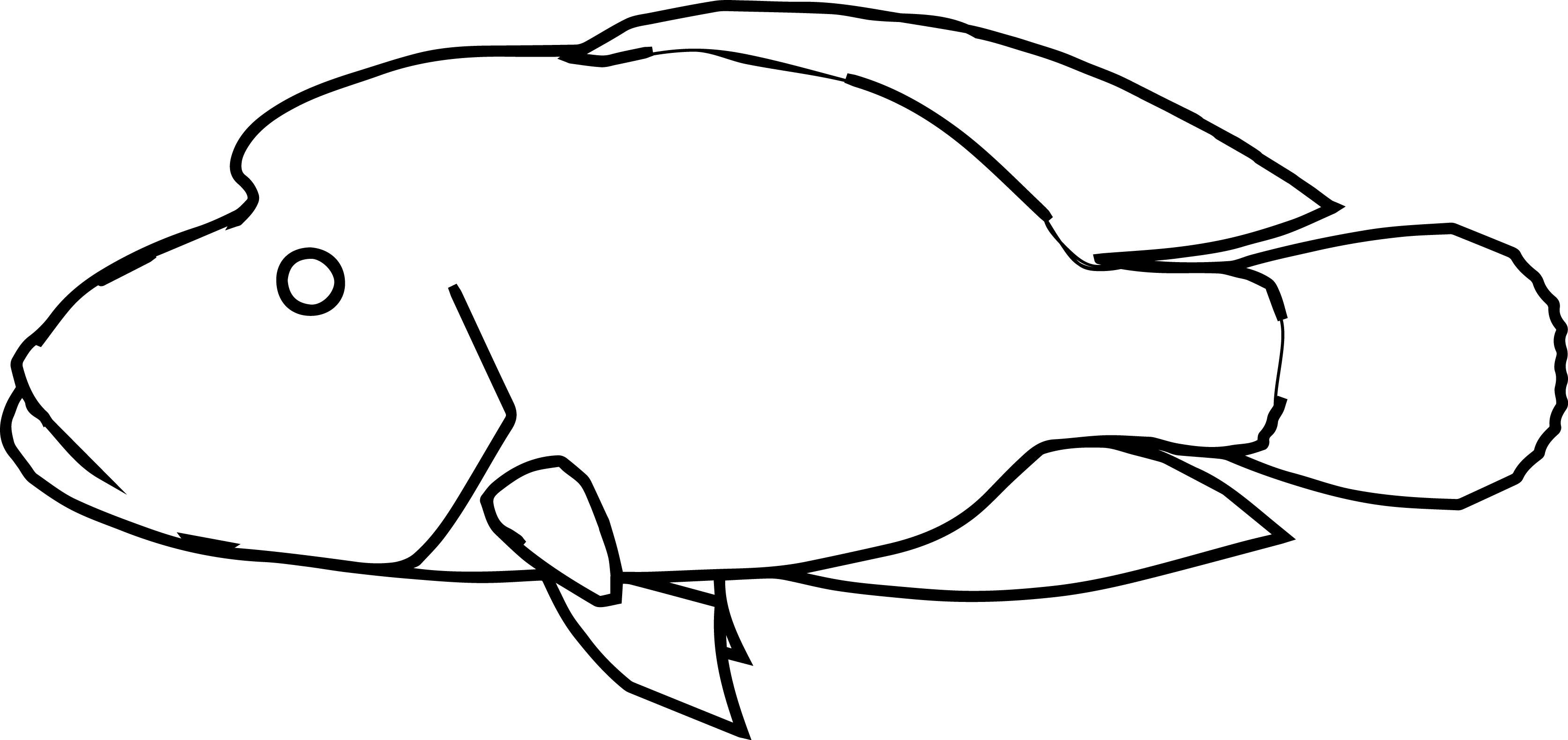 Napoleon Fish Coloring Page