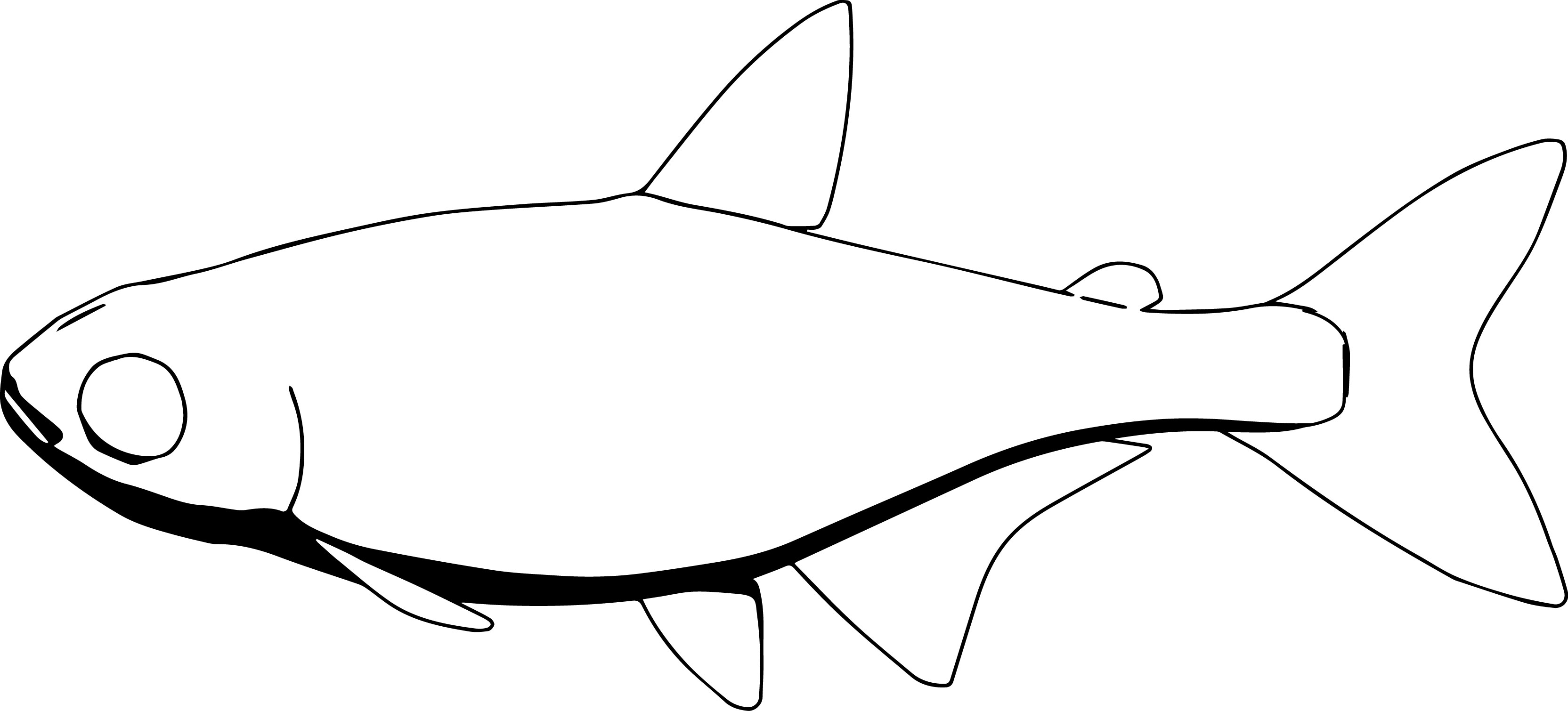 Neontetra Fish Coloring Page