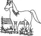 Cartoon Horse Coloring Page 51