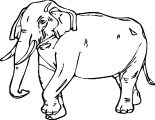 Elephant Coloring Page 47