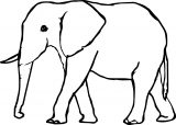 Elephant Coloring Page 77