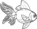 Fish Coloring Page Wecoloringpage 090