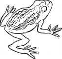 Frog Coloring Page 005