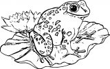 Frog Coloring Page 068