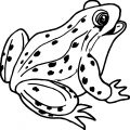 Frog Coloring Page 132