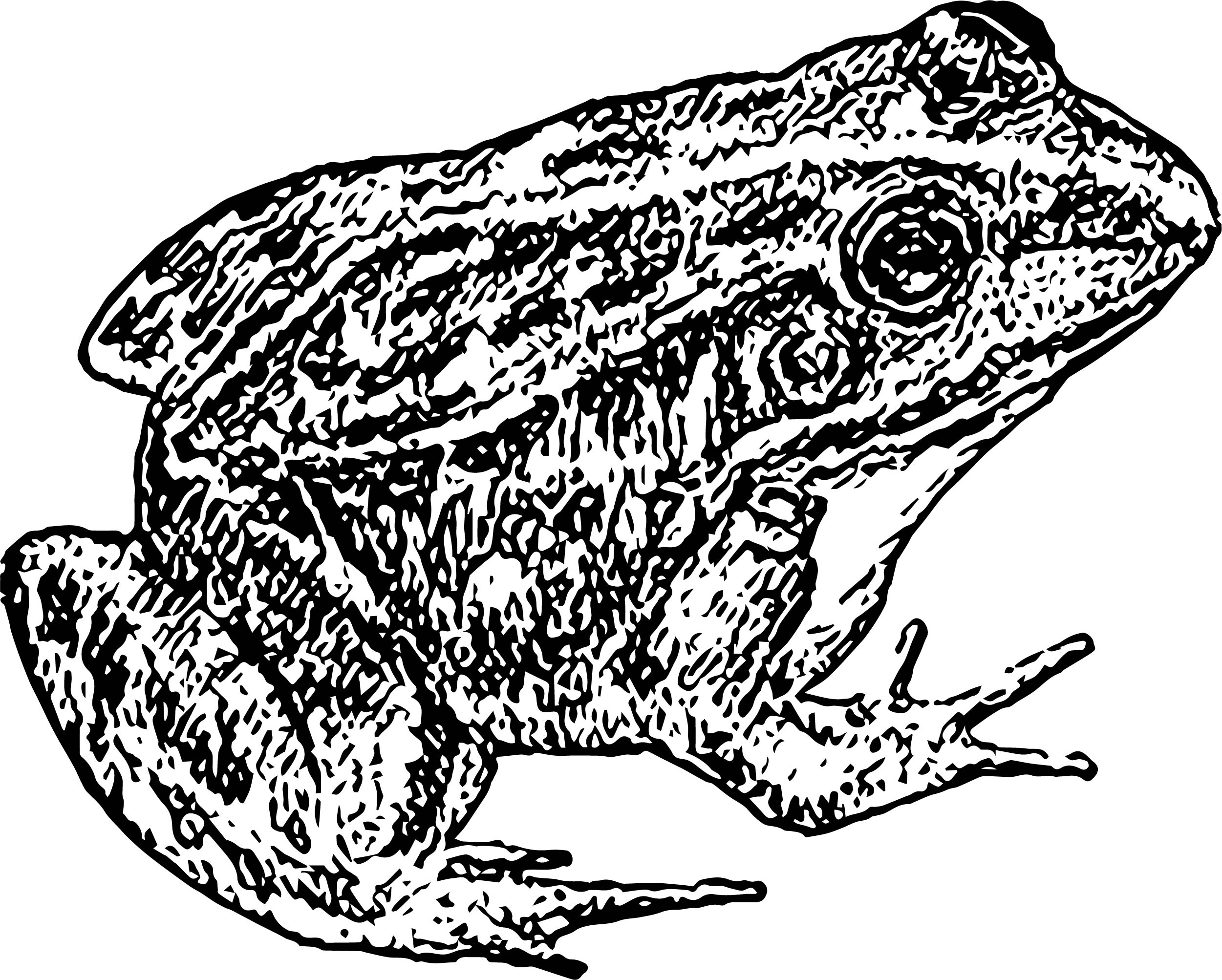 Frog Coloring Page 158