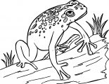 Frog Wood On Coloring Page