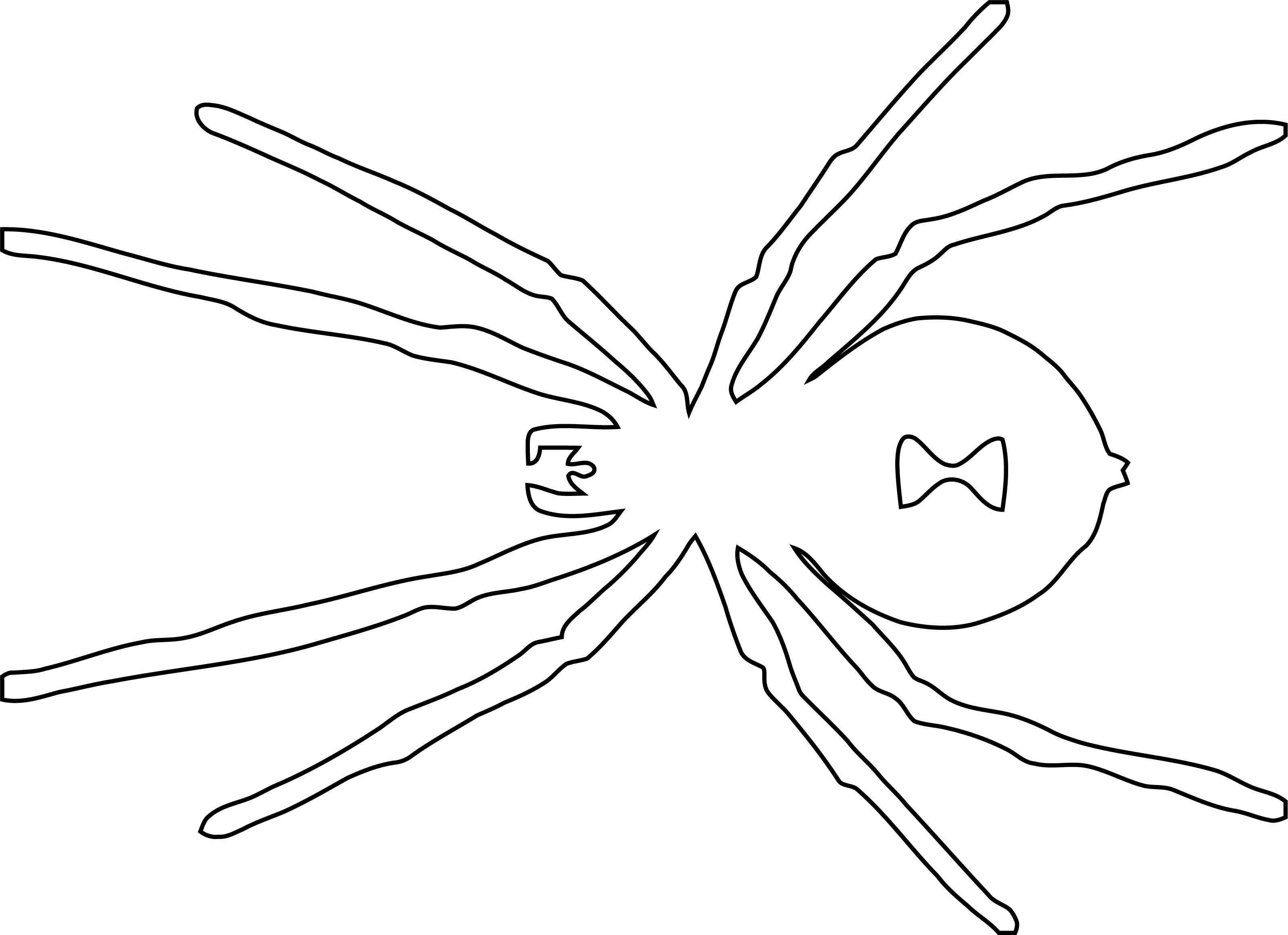 Halloween Spider Outline Coloring Page