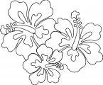 Hawaiian Flower Coloring Page WeColoringPage 21