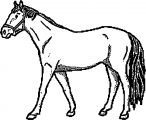 Horse Coloring Page Wecoloringpage 033
