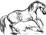 Horse Coloring Page Wecoloringpage 070