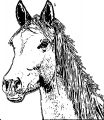 Horse Coloring Page Wecoloringpage 131