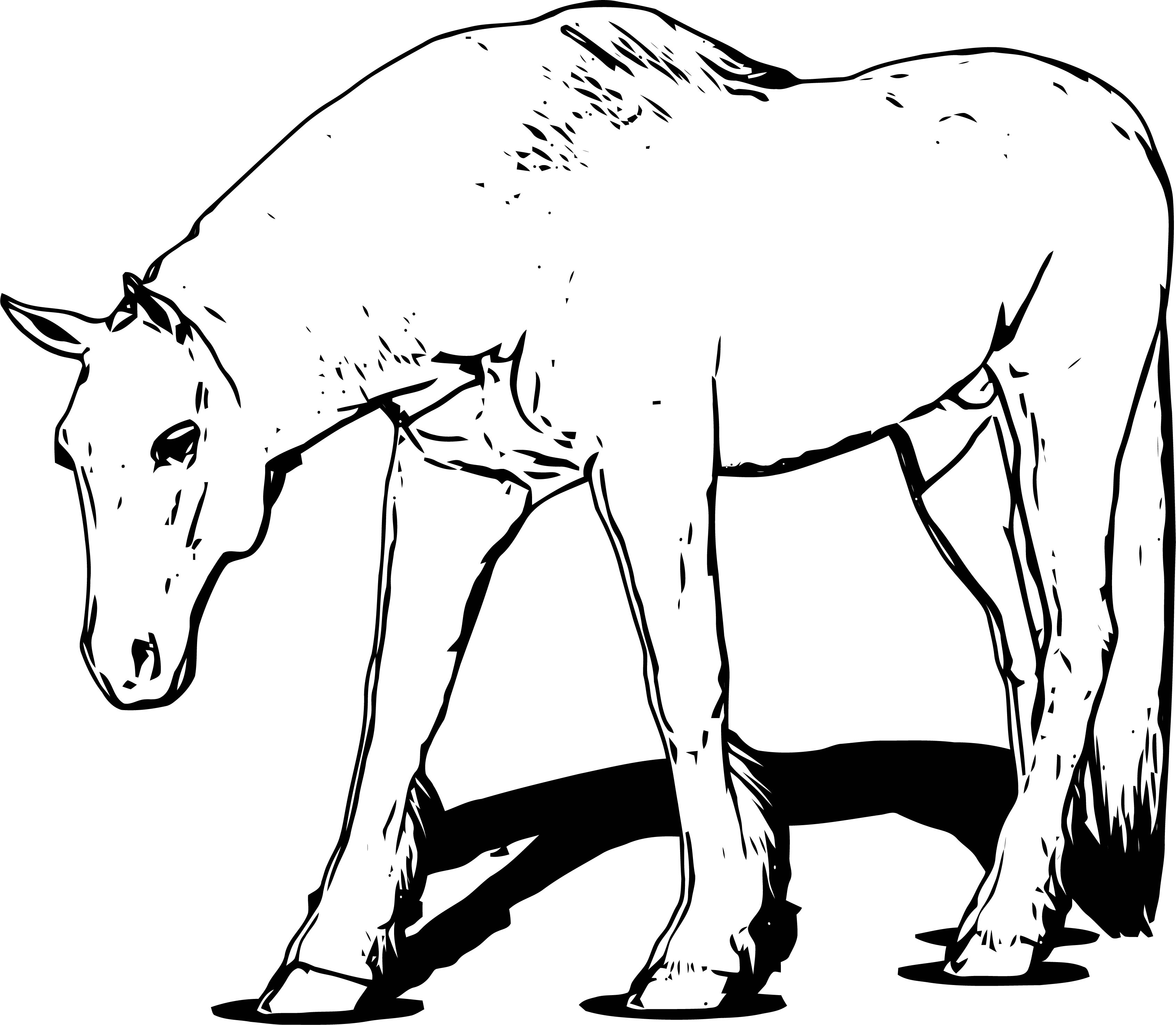 Horse Coloring Page Wecoloringpage 140