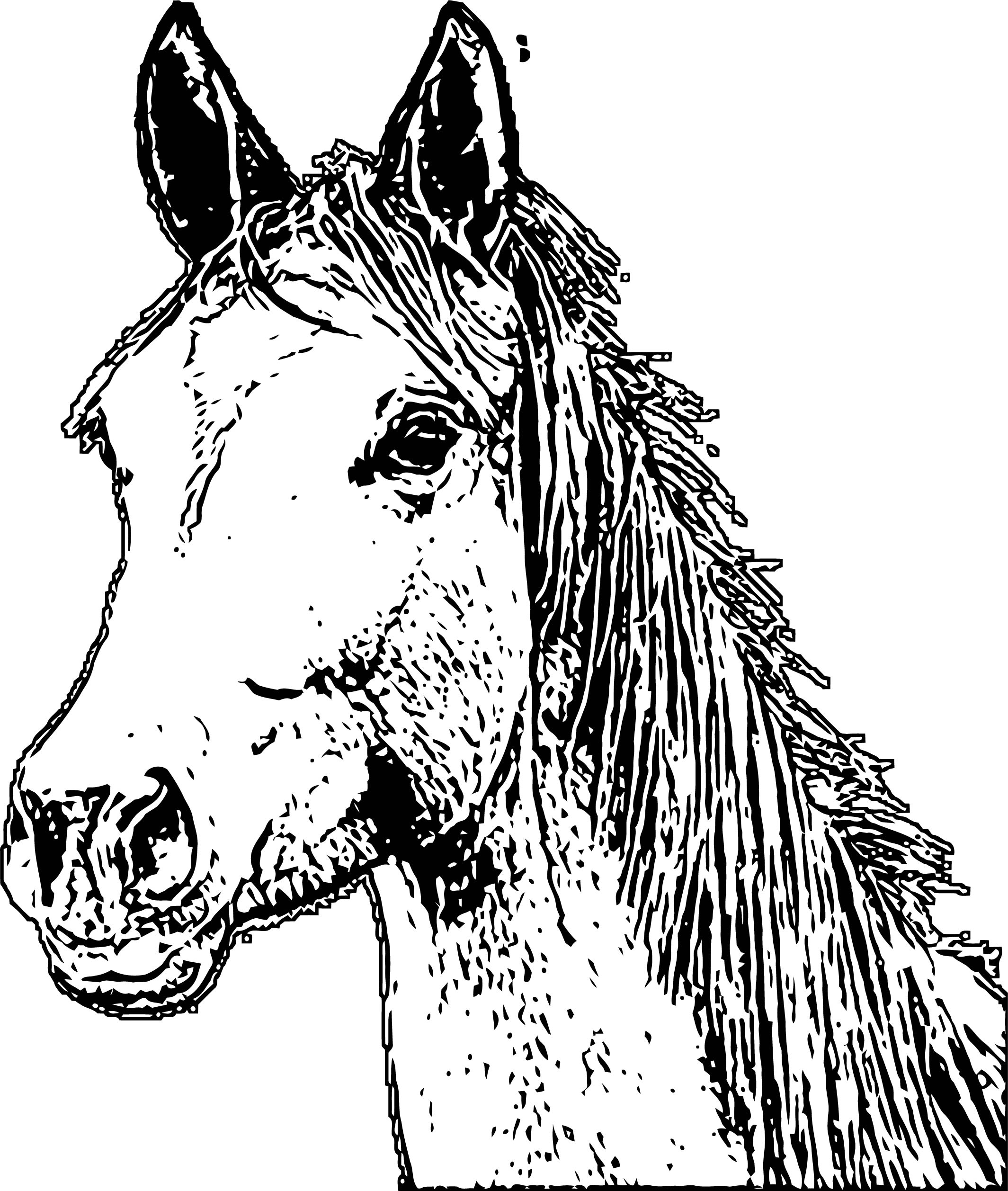 Horse Coloring Page Wecoloringpage 157