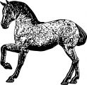 Horse Coloring Page Wecoloringpage 169