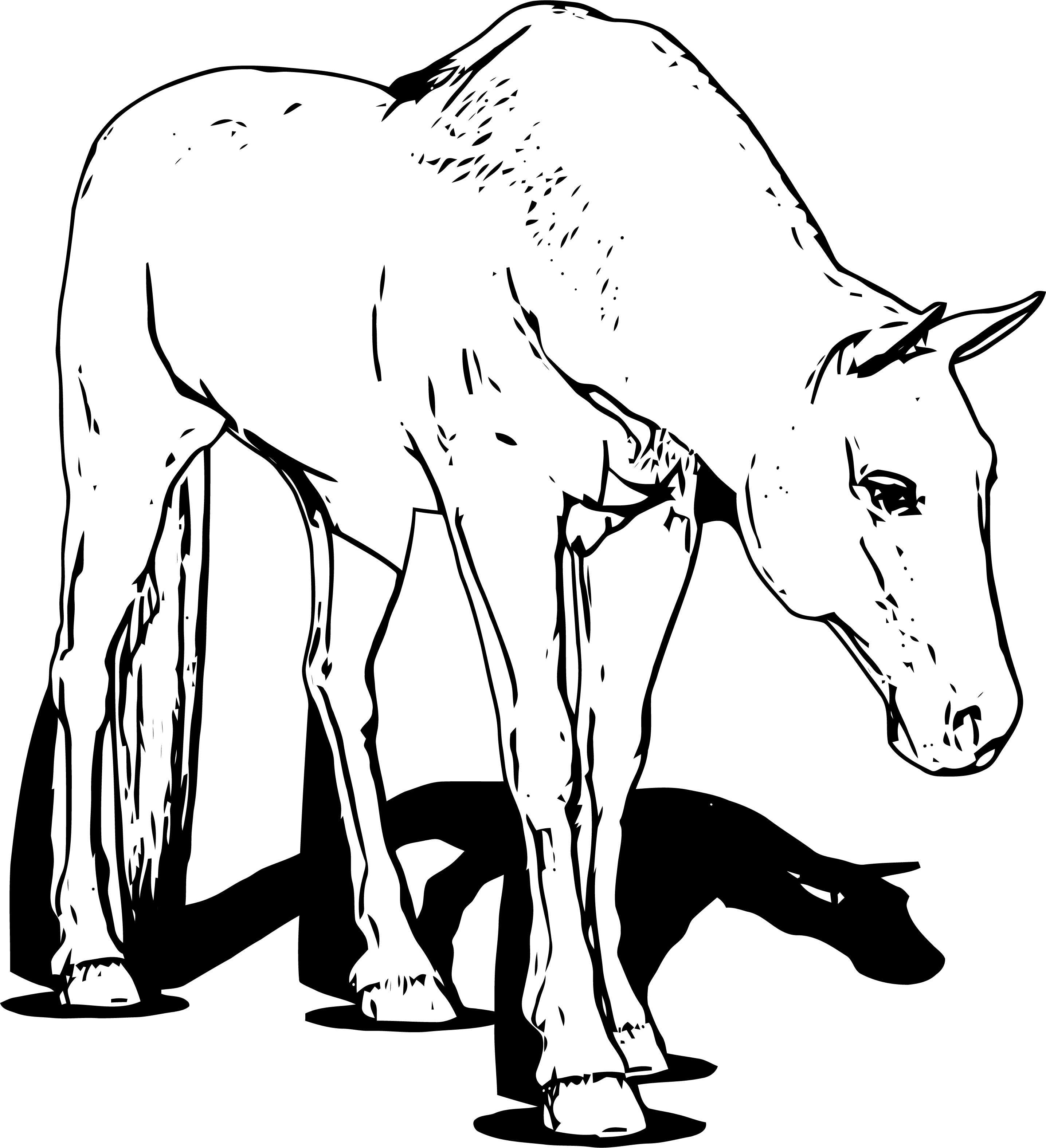 Horse Coloring Page Wecoloringpage 174