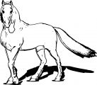 Horse Coloring Page Wecoloringpage 176