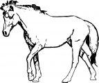 Horse Coloring Page Wecoloringpage 183