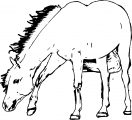 Horse Coloring Page Wecoloringpage 197
