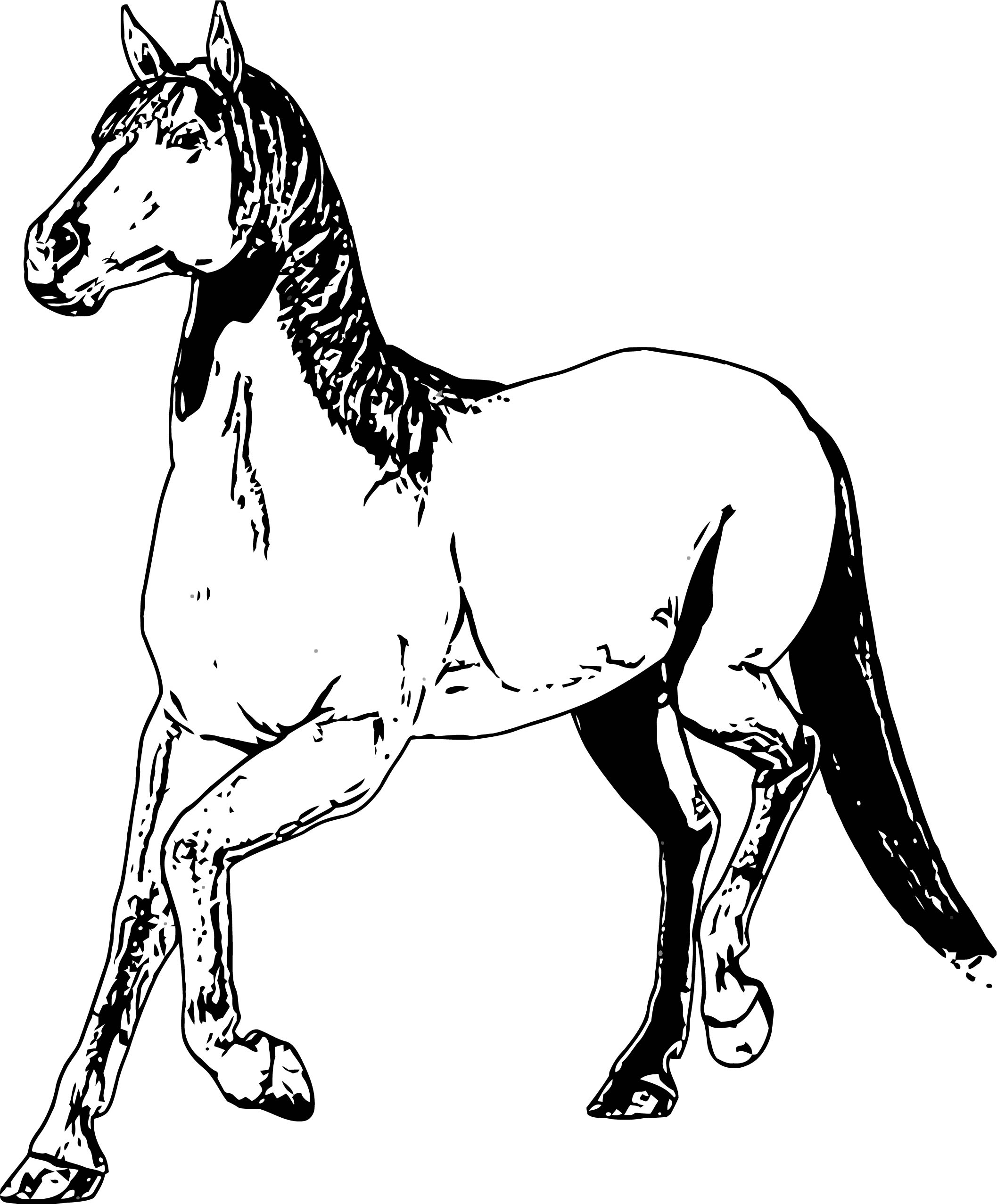 Horse Coloring Page Wecoloringpage 204