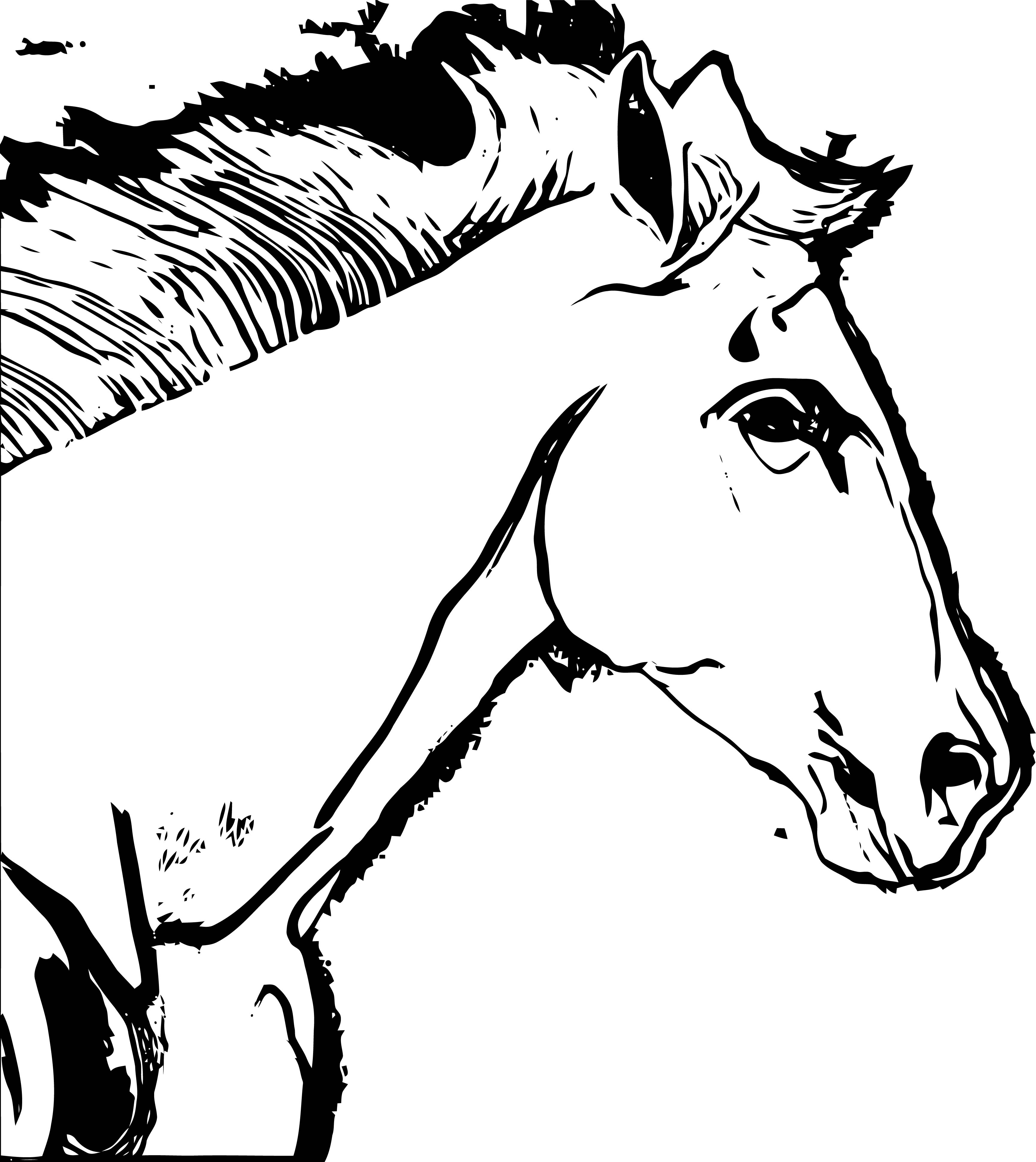 Horse Coloring Page Wecoloringpage 206