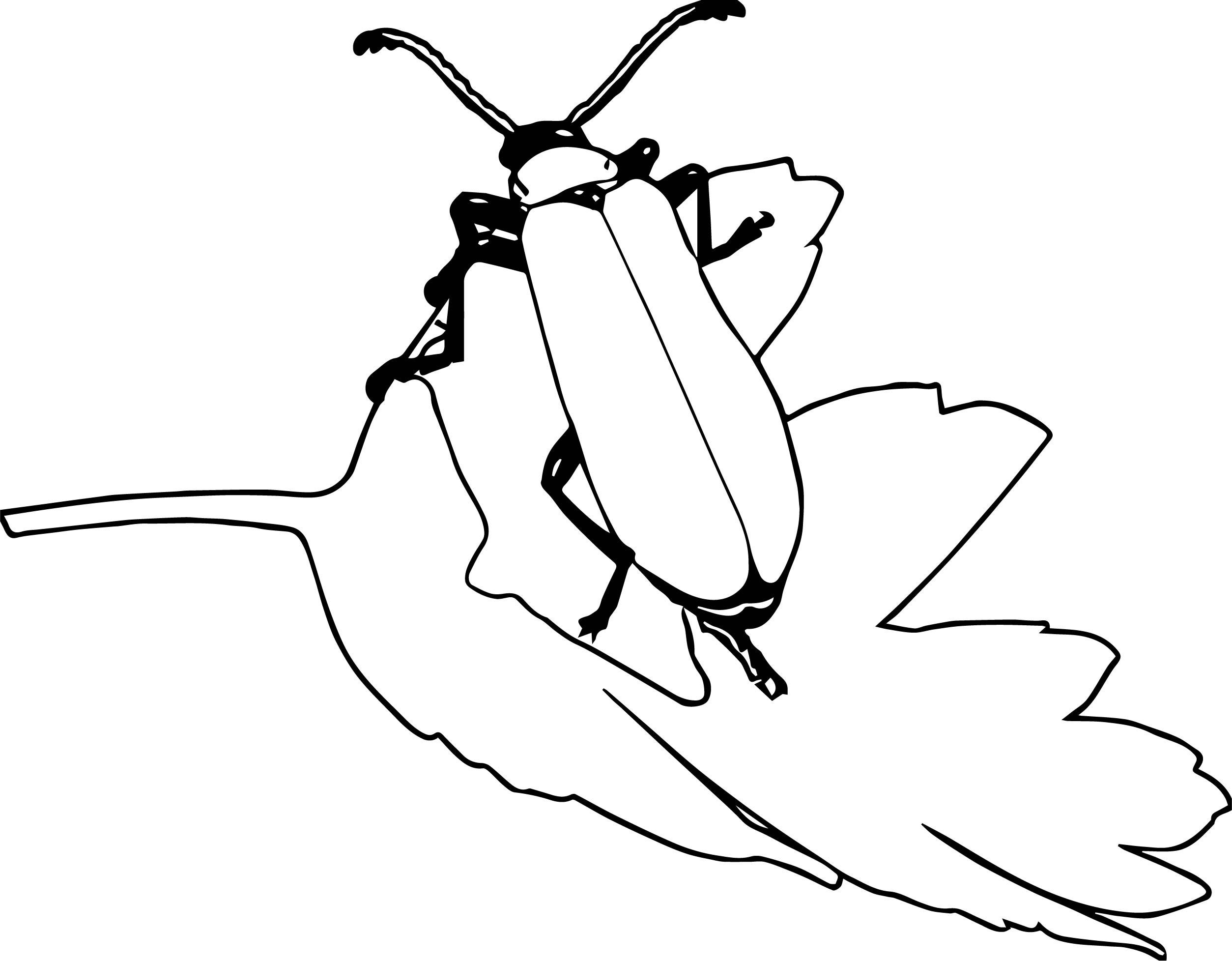 Insect Coloring Page WeColoringPage 06