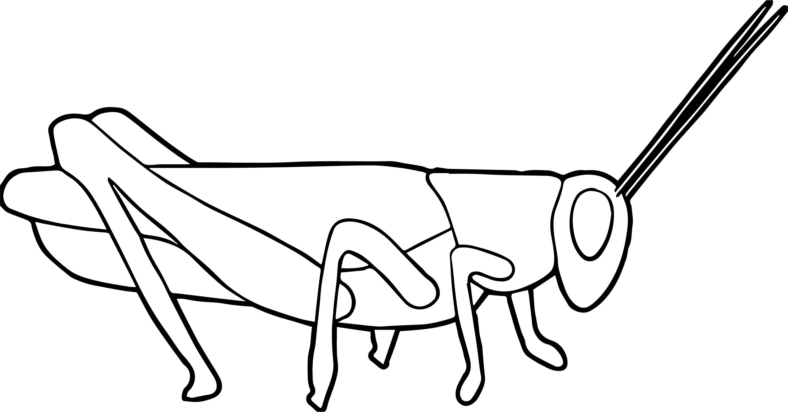 Insect Coloring Page WeColoringPage 43
