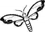 Insect Coloring Page WeColoringPage 44