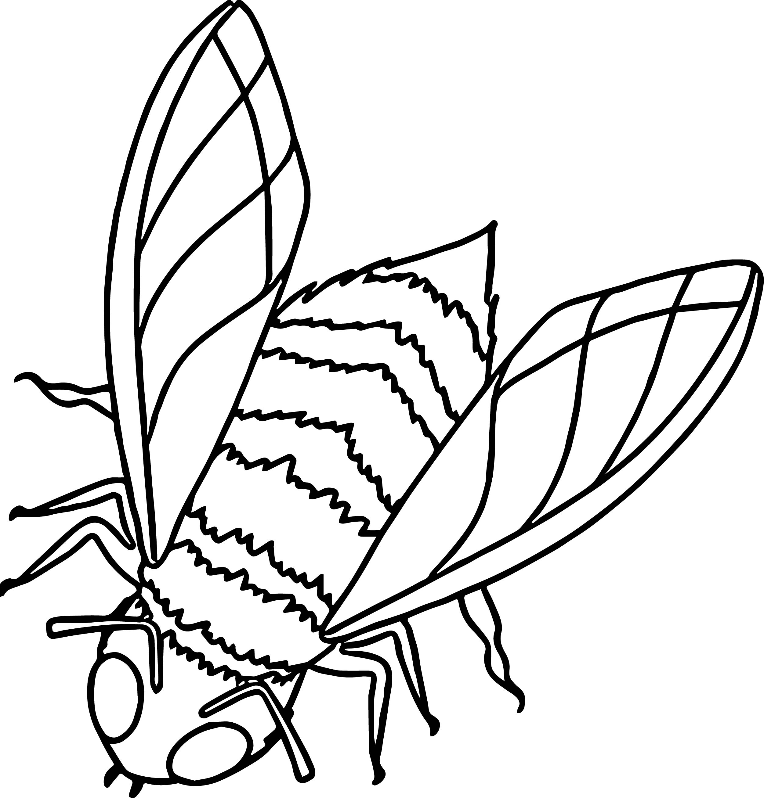 Insect Coloring Page WeColoringPage 47