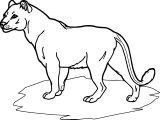Lion Coloring Page 33