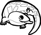 Lizard Coloring Page 01