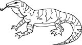Lizard Coloring Page 04