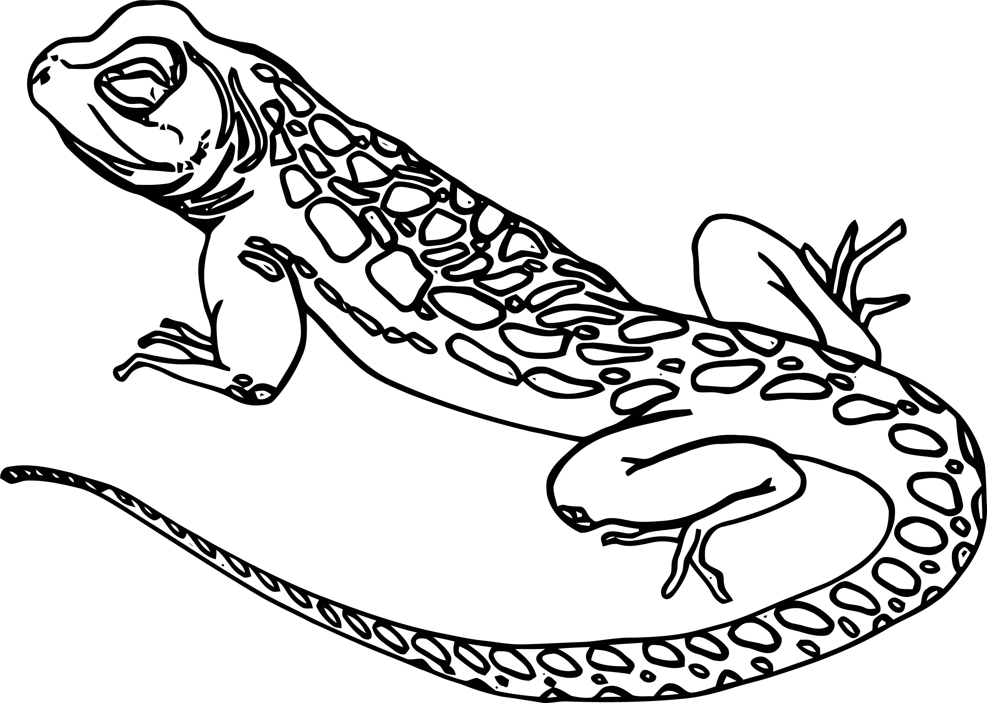 Lizard Coloring Page 12