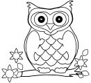 Owl Bird Halloween Halloween Coloring Page