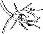 cockroach coloring page insect