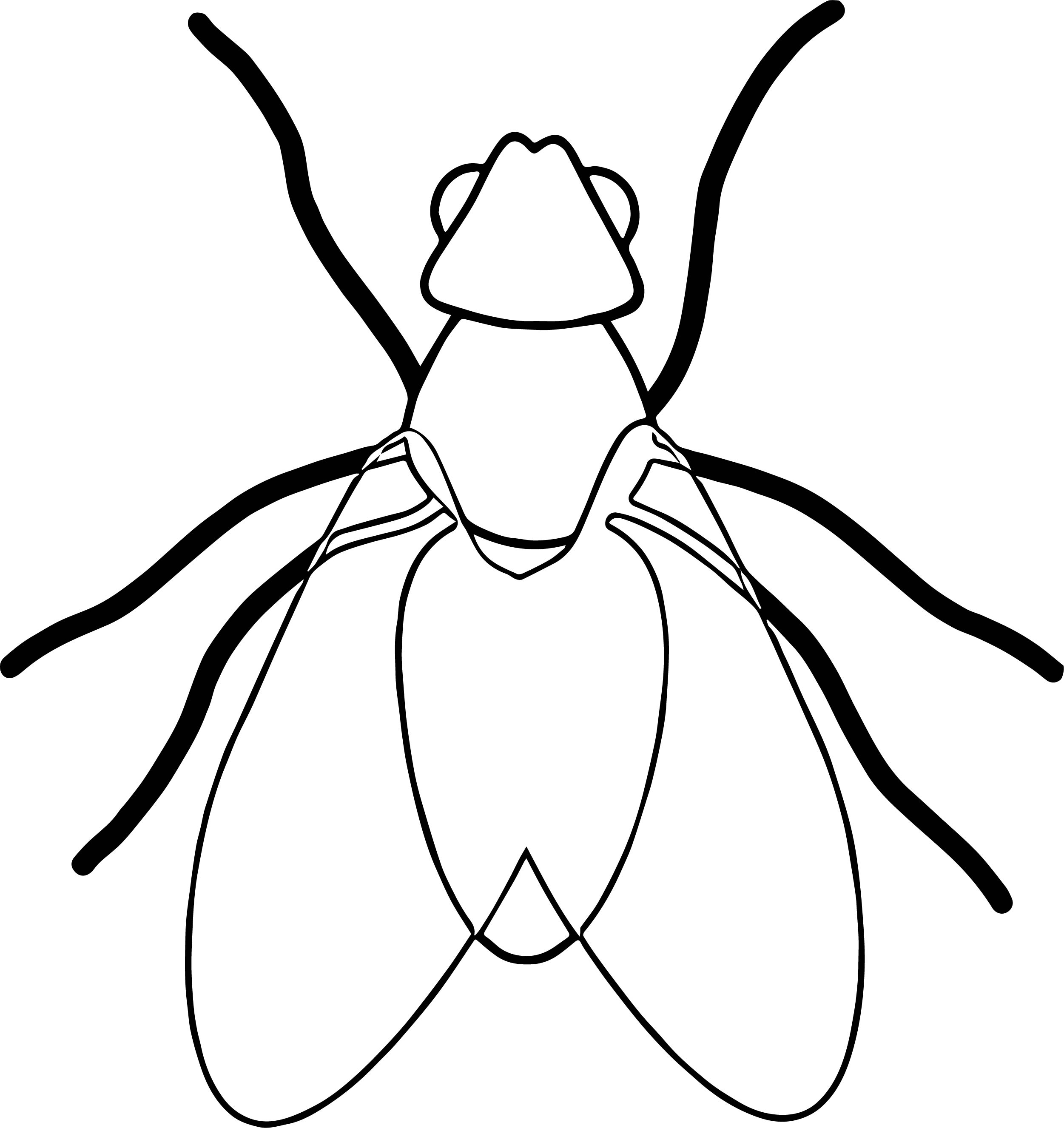 fly bug insect coloring page